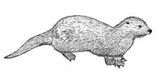 Otter Rechtsbijstand